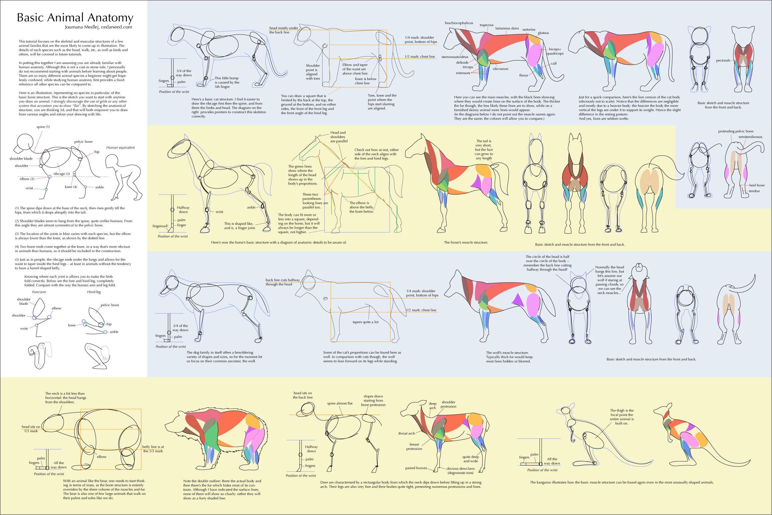 animal references - Google Search | Art Help | Pinterest | Animal ...