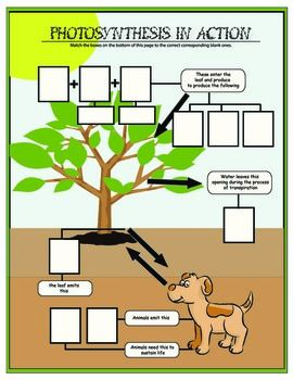 Photosynthesis in Action Activity Grade 6, 7, 8
