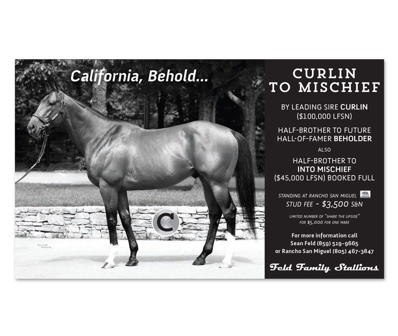 Curlin To Mischief BW Daily Racing Form Half Page Ad  Greenfield