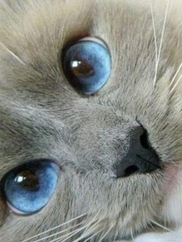 Twitter Diab1aconcuerna Kittens Cutest Beautiful Cats Pretty