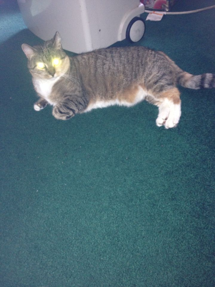 Oh god my cat is terrifying.