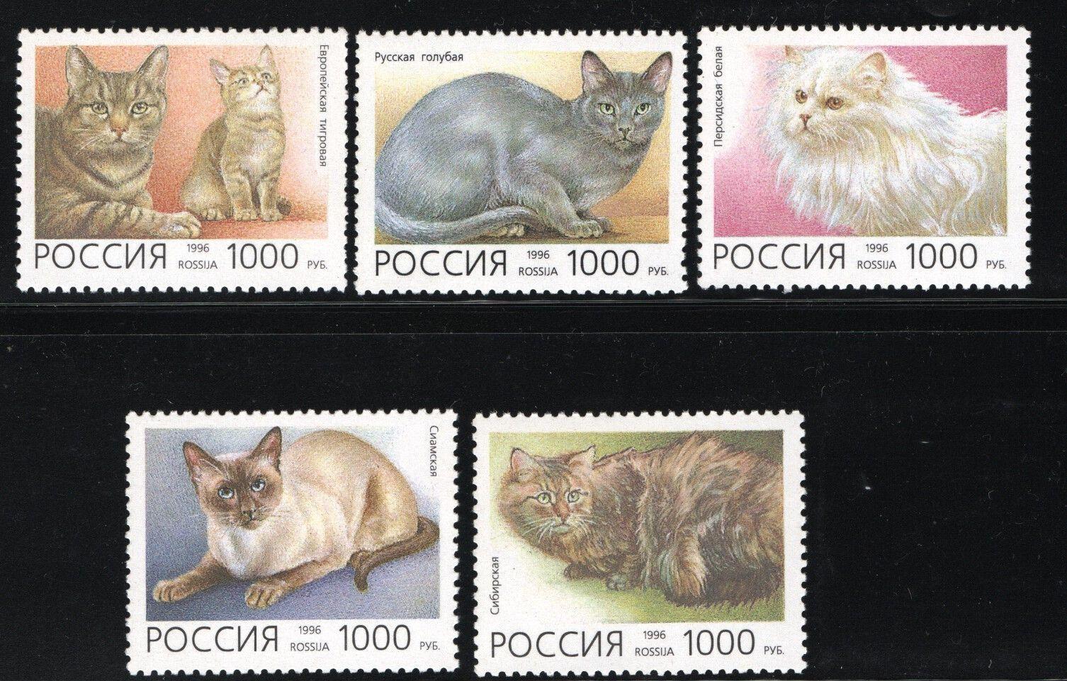 #6307-6311 Russia - Domestic Cats (MNH)
