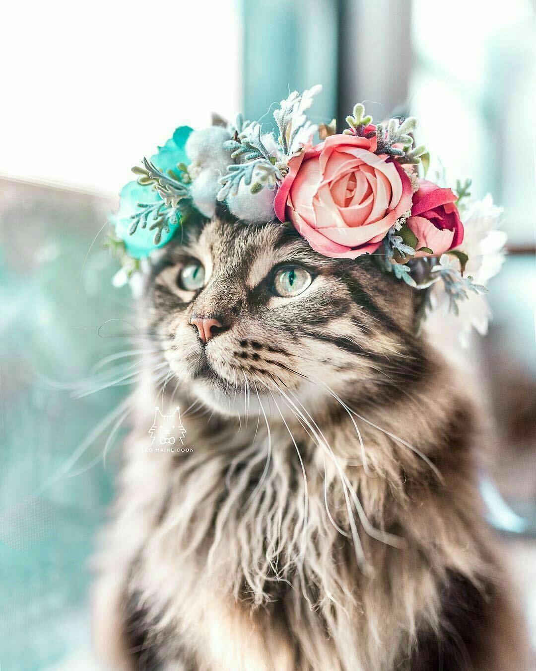 Pin by Sharon Larsen on Purrrr~fect  | Cats, Cute cats