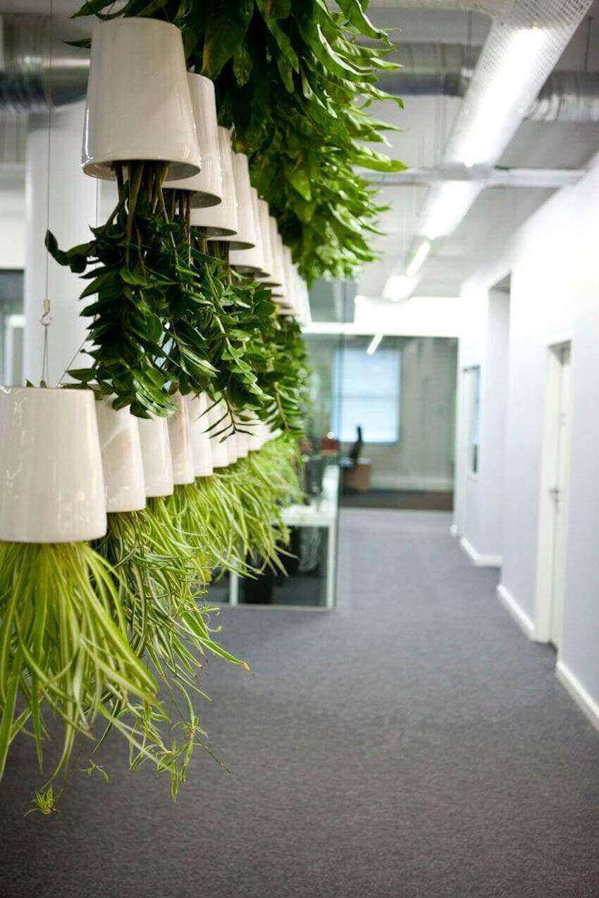 10 Amazing Benefits Of Eco Friendly Living Wall Partitions