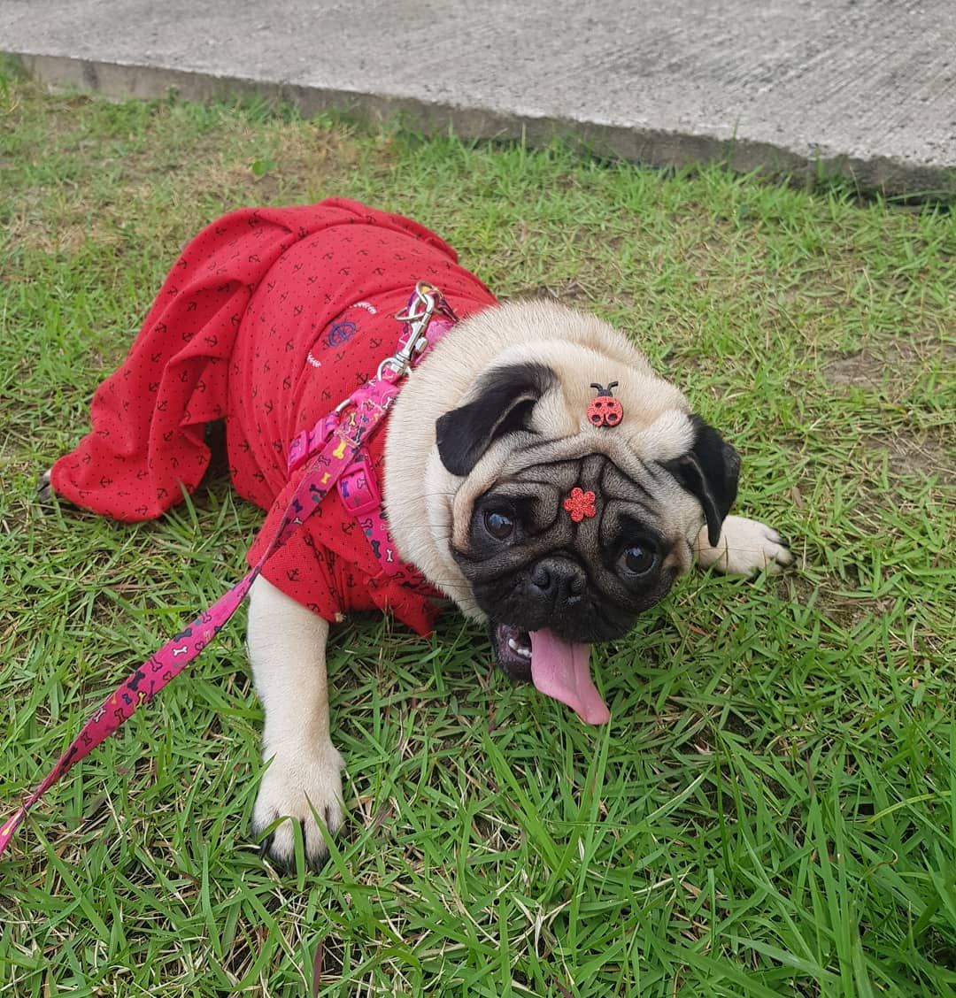 What Is Kennel Cough? Symptoms To Observe