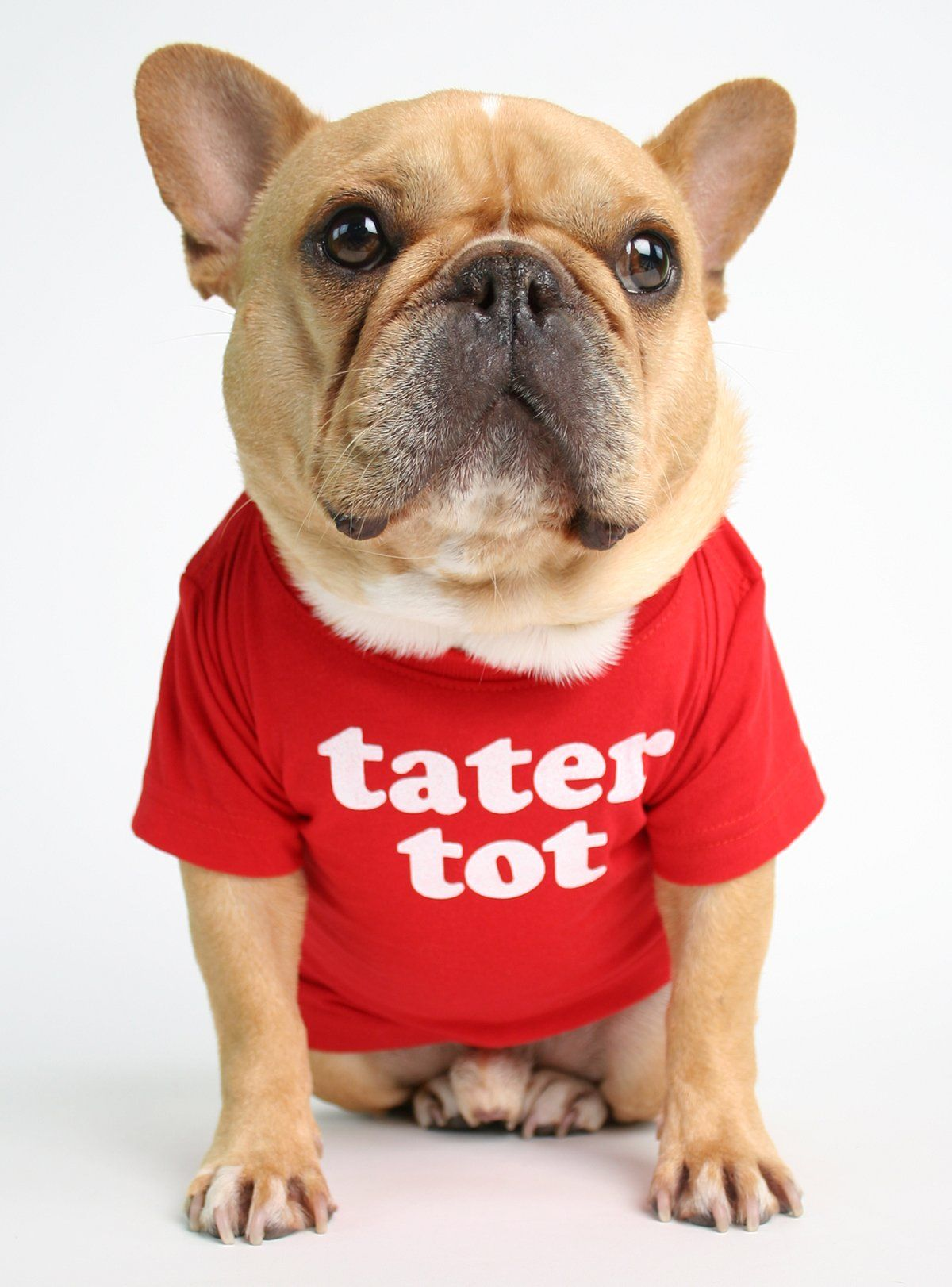 Tater Tot Dog Tee Dog Shirt French Bulldog Puppies Dogs