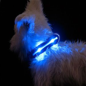 L.E.D. Collar for the light of your life.