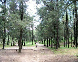 Bosque el centinela - En Donde correr