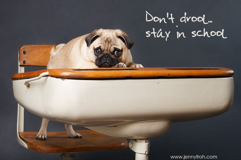 Don T Drool Stay In School Pugs Pug Puppy