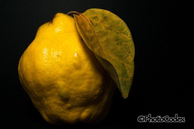 Photograph of quince fruit with leaf.