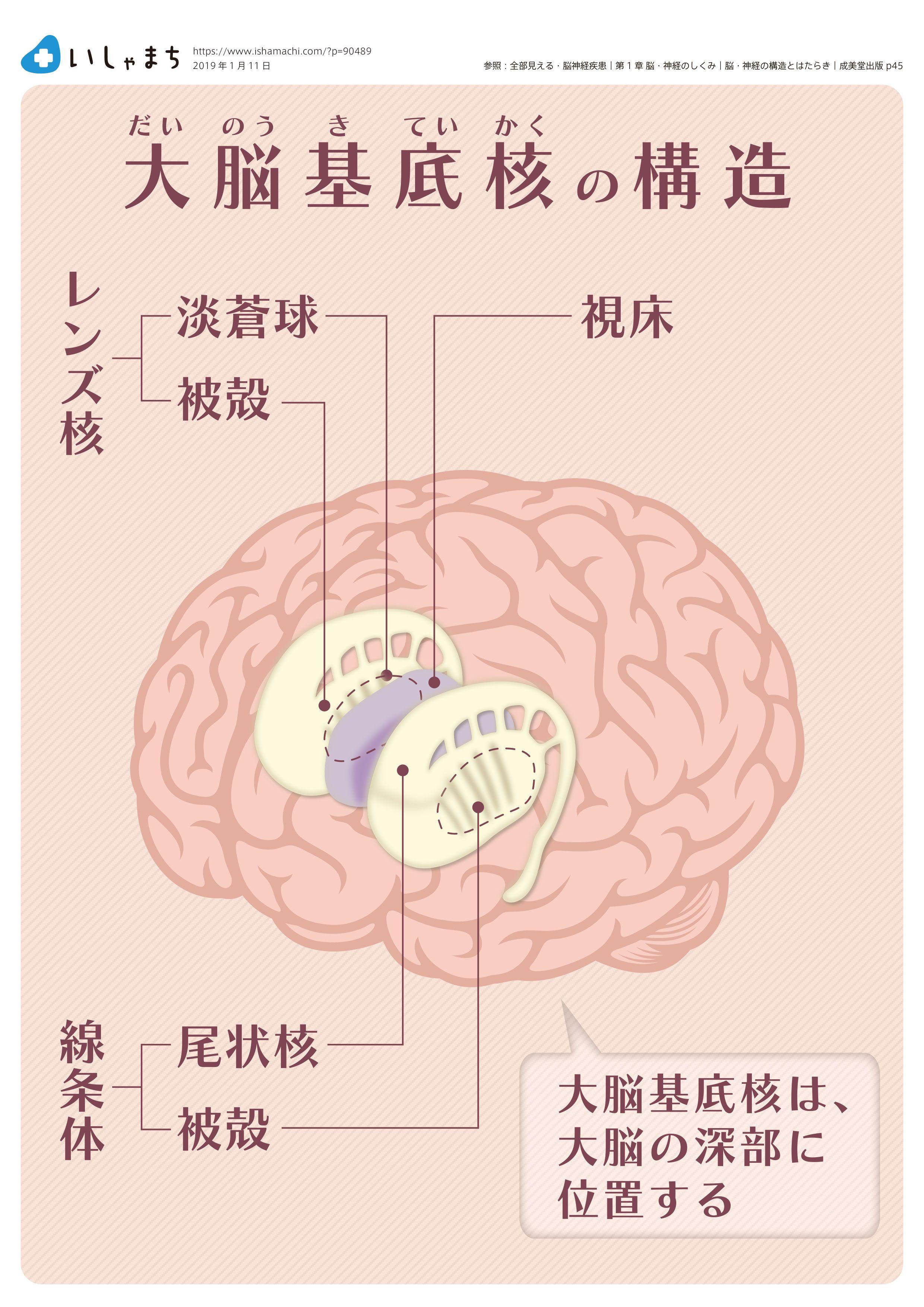 大脳 皮質 基底 核 変性 症 大脳皮質基底核変性症 - 基礎知識(症状・原因・治療など)