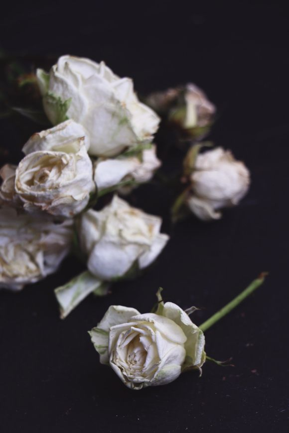 Two Ways To Preserve Flowers How To Preserve Flowers Drying Roses Dried And Pressed Flowers