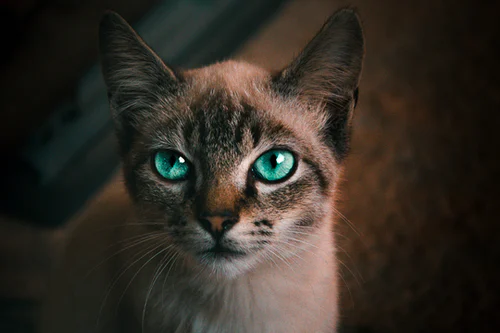 750 Cute Cat Pictures Download Free Images On Unsplash Cute Cats Cute Cats Photos Cats