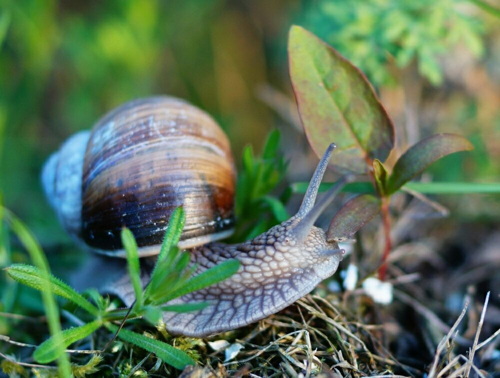 Slow food lifestyle by Joanna Urban on 500px