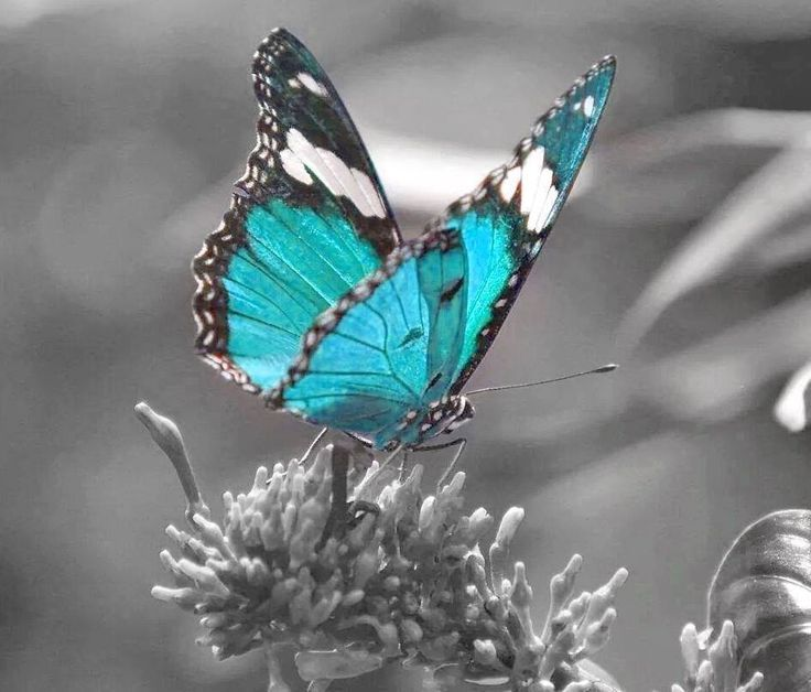 mulher de f - Butterflies To Color 2
