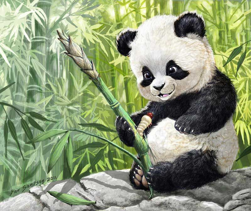 Панда смешная рисунок, днем рождения женщине