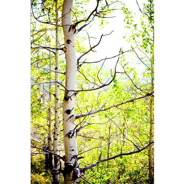 Calgary landscape photographer Fine Art photography Calgary landscape... ❤ liked on Polyvore