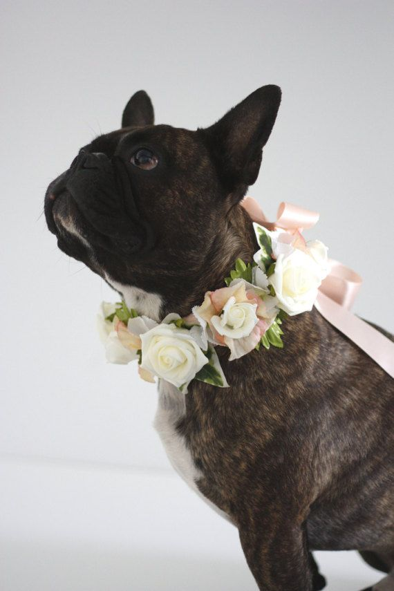 Small Peach and Coral Pink Wedding Dog Collar Flower Crown Wreath Cat Collar Flower Girl Dog