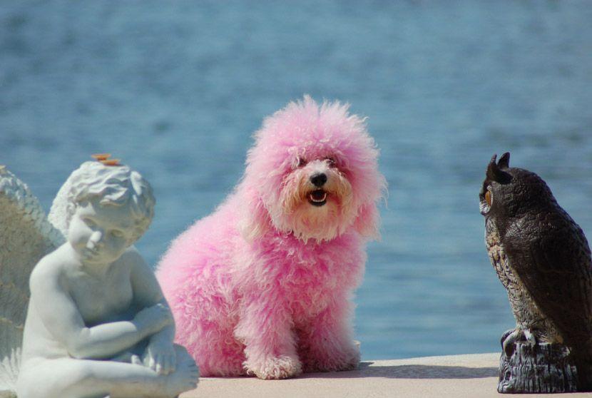 Pink dog!   #rosa #pink