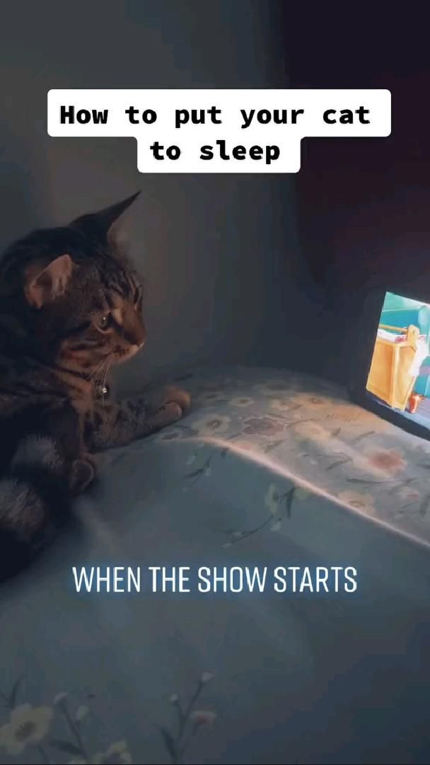 He just love his Tom & Jerry