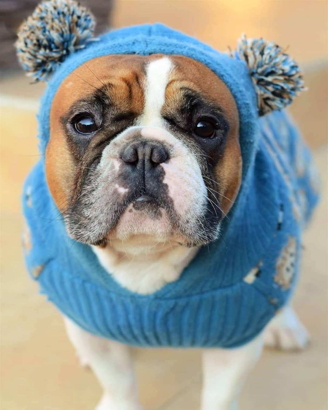 Home Dog Grooming Tips Pekna Som Panicka Ddomika Mi Doniesla
