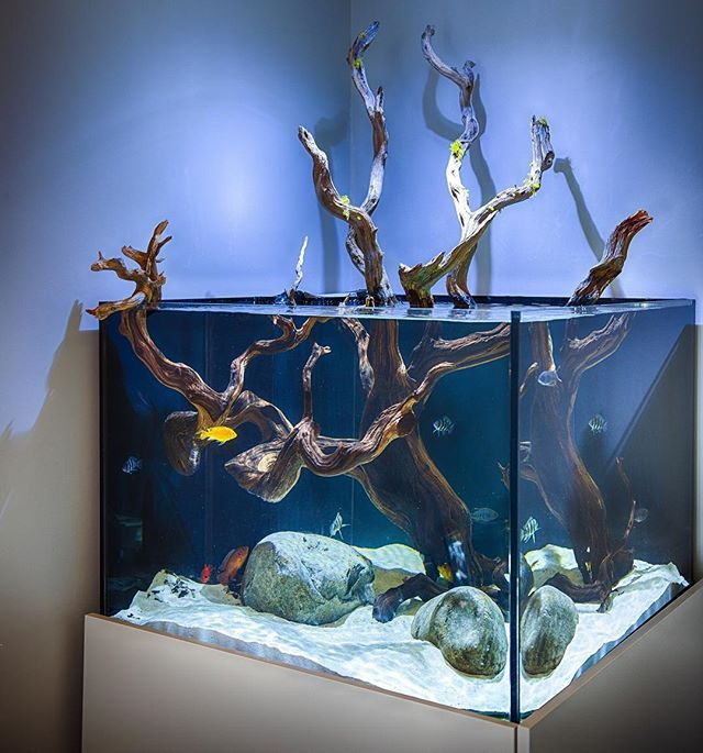 Love This Open Top Aquarium With A Gorgeous Peice Of