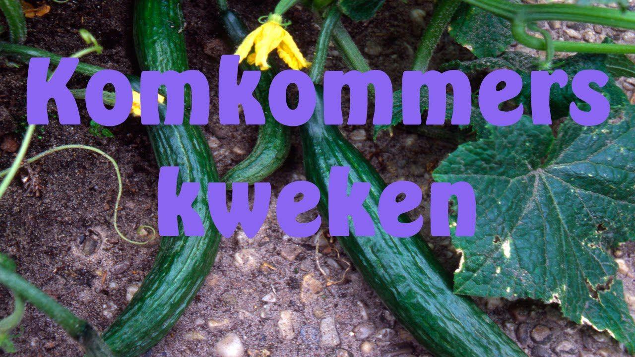 Komkommers zaaien groenten zaaien oogsten etc tuin for Groenten tuin
