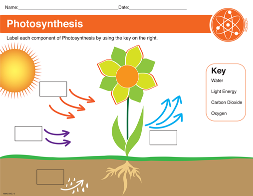 Image result for label photosynthesis – Photosynthesis Diagram Worksheet