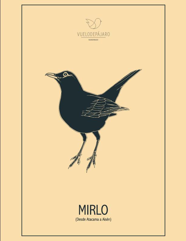 Historias De Pajaros Nuestros Pajaros En Primer Plano Con Sus Cuentos Y Sus Vuelos De Chile Para El Mundo Mirlo Aves De Chile Mirlo Pajaros Silvestres
