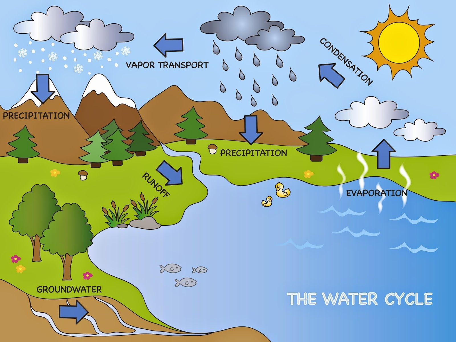 Earth S Water Supply Lesson Plans For Elementary Water Cycle Water Cycle Poster Water Cycle Project [ 1200 x 1600 Pixel ]