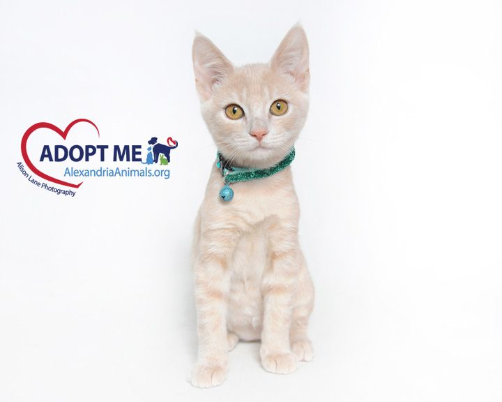Simba By Alison Lane Photography Adoption Animals Cats