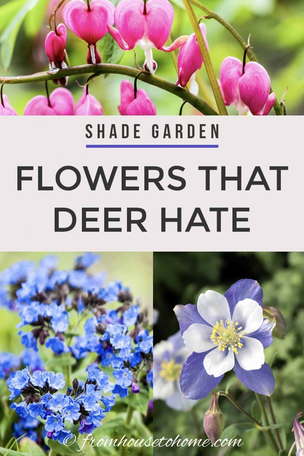 15 Beautiful Deer Resistant Shade Plants To Grow In Your