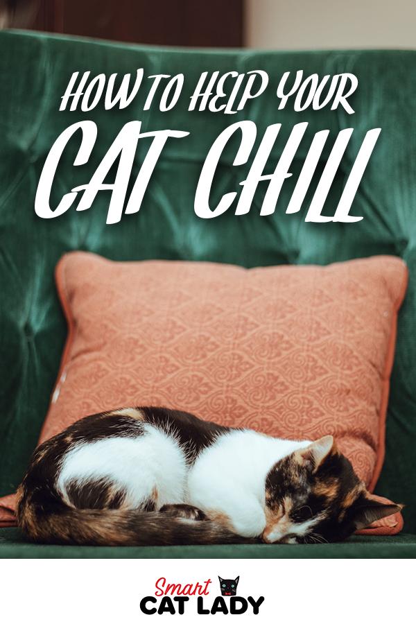 738b42ca818108f434196518d020dbf8 - How Do You Get A Cat To Calm Down