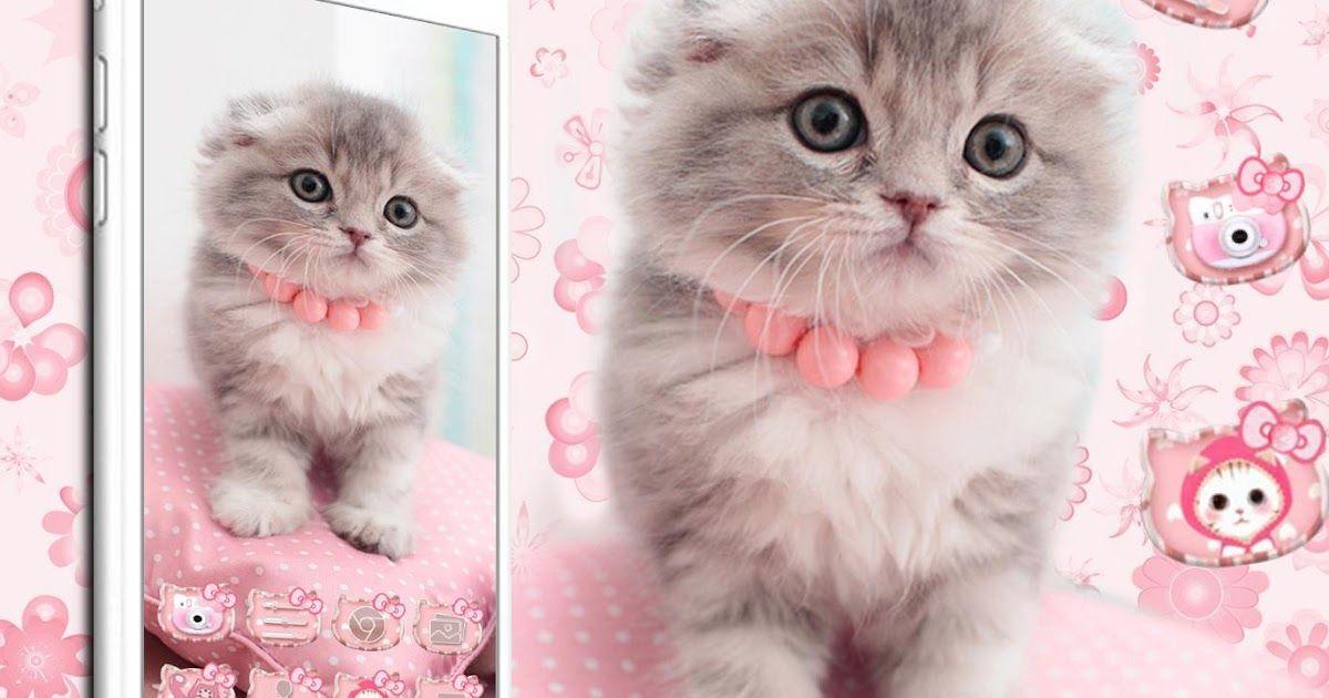 Gambar Wallpaper Kucing Lucu Pink - DOKUMEN PAUD TK SD SMP