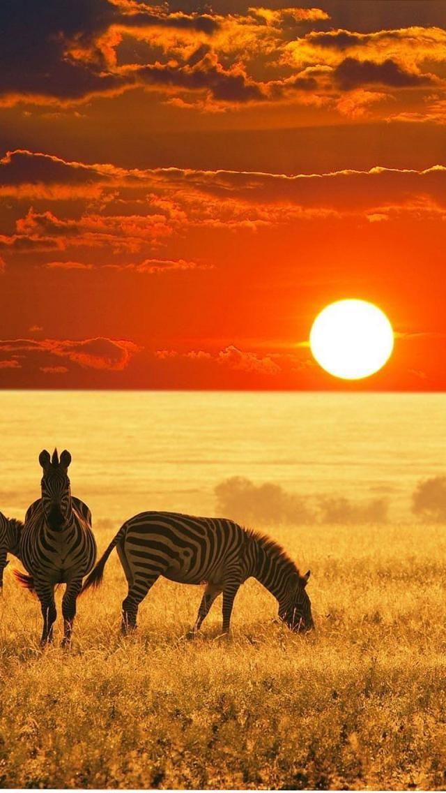 Zebras Sunsets Africa Afrikanischer Sonnenuntergang Afrika