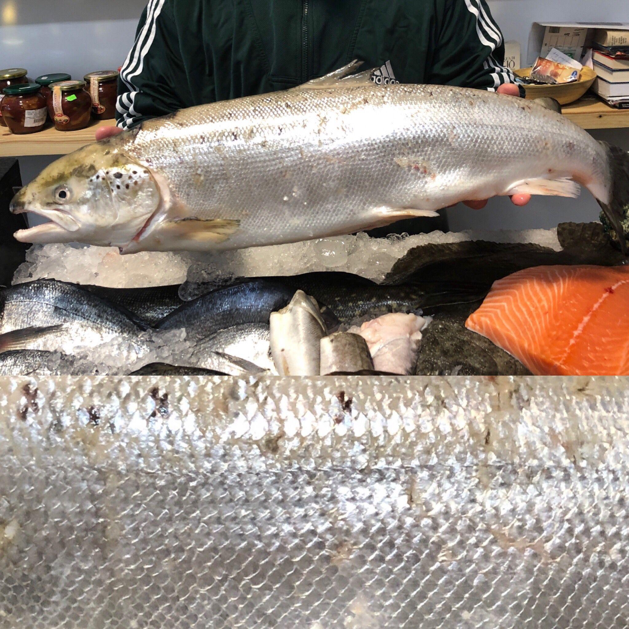 Baltic Salmon Salmon Fish Meat