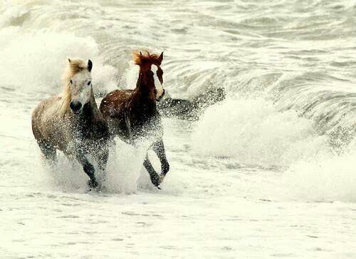 ❦ The Best of America by Horseback - Myrtle Beach, SC - RFD-TV