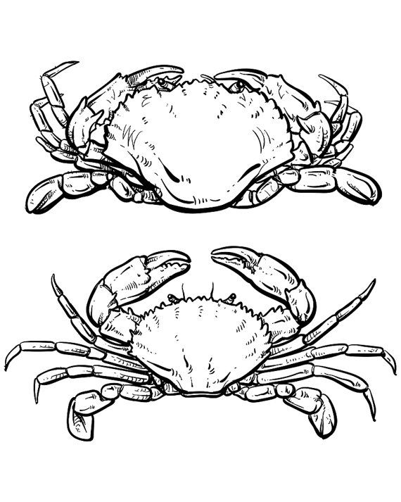 80 Off Sale Vector Crab Drawing Hand Drawn Outline Seafood