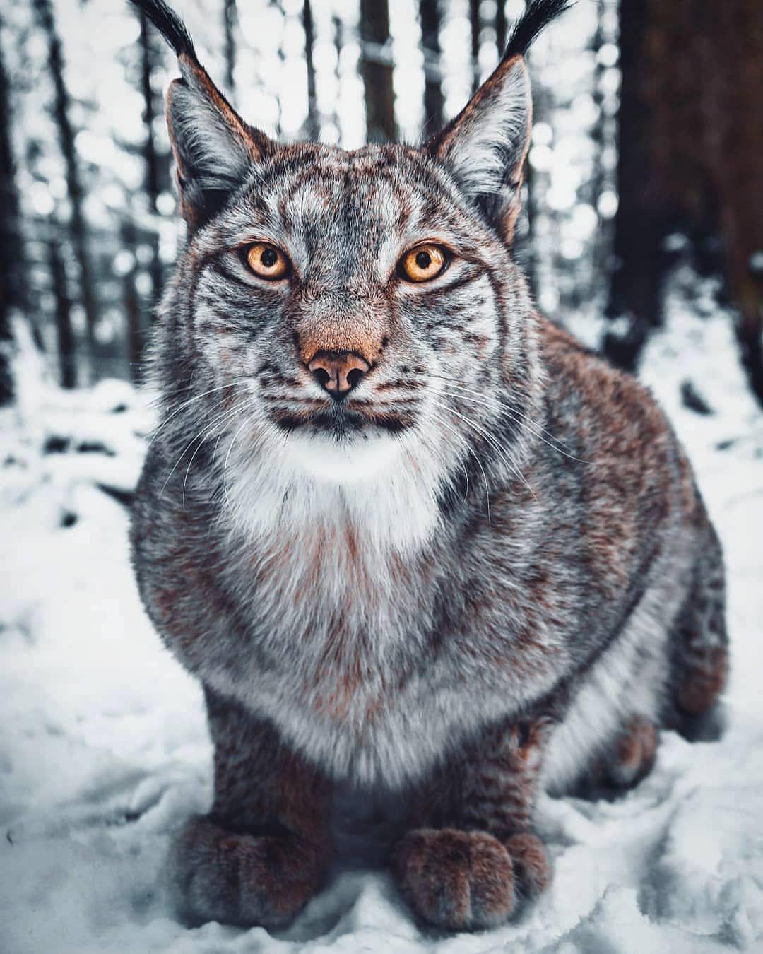 Pin on Wild Life Mammals