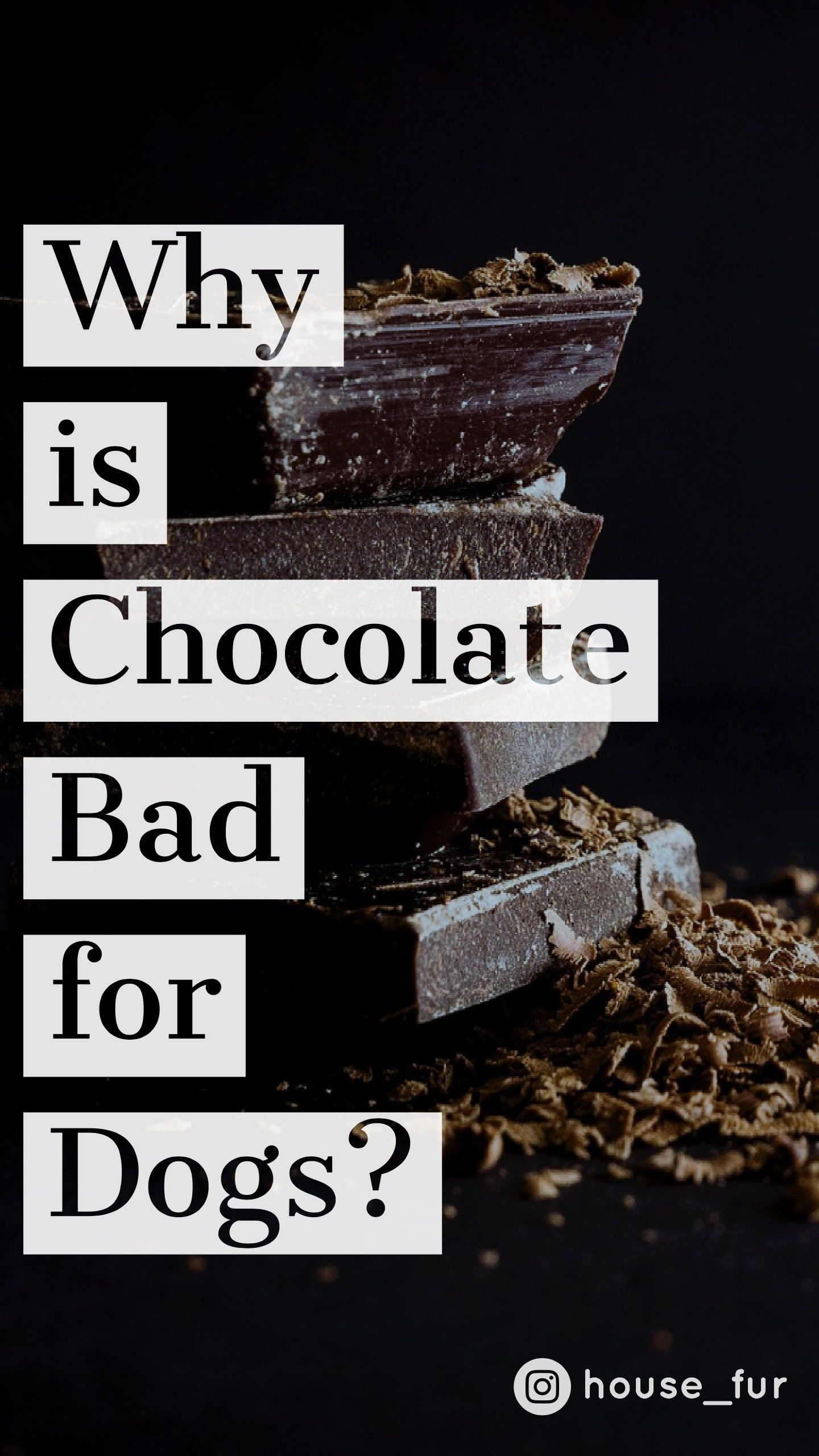 Why Chocolate Is Bad For Dogs Dogs Chocolate Cocoa