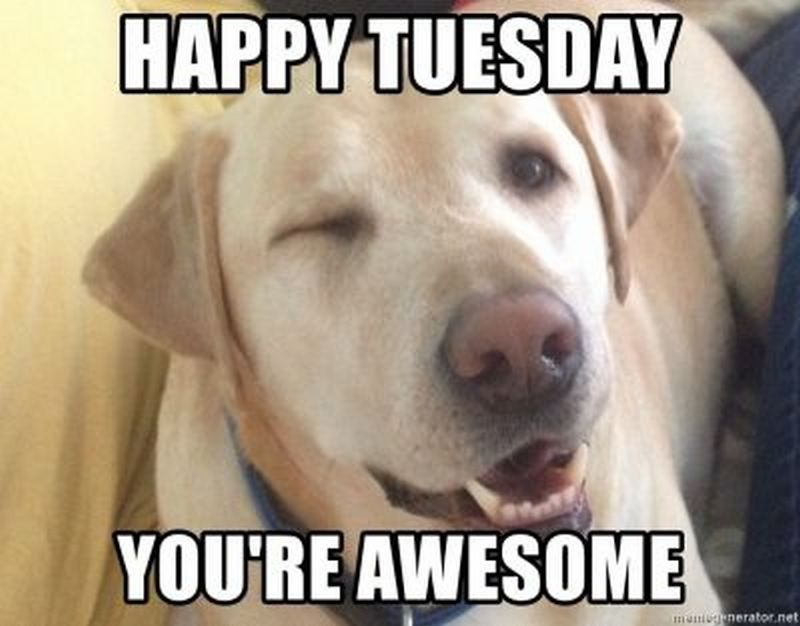 101 Funny Tuesday Memes When You Re Happy You Survived A Workday Tuesday Quotes Happy Tuesday Quotes Good Morning Funny