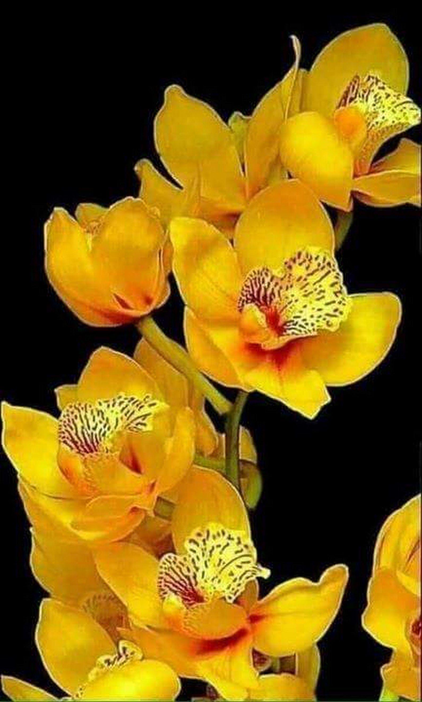 Pin de rafael portillo en orquideas pinterest fleurs for Vivero de plantas exoticas