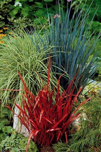 Vente florimon 19947 plantes vivaces gramin es for Vente plantes vivaces