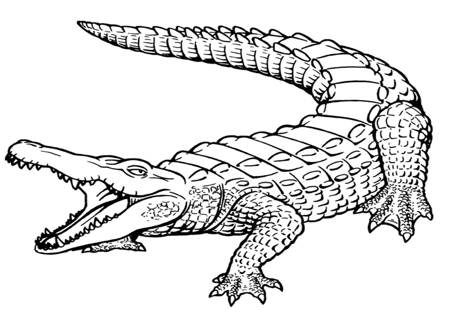 Alligator Coloring Sheet in 2019 | Coloring pages, Detailed ...