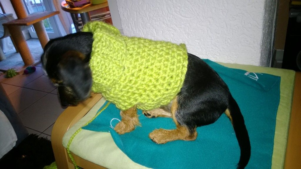 Hundepullover - selbst gehäkelt | Handmade | Pinterest | Hund und ...