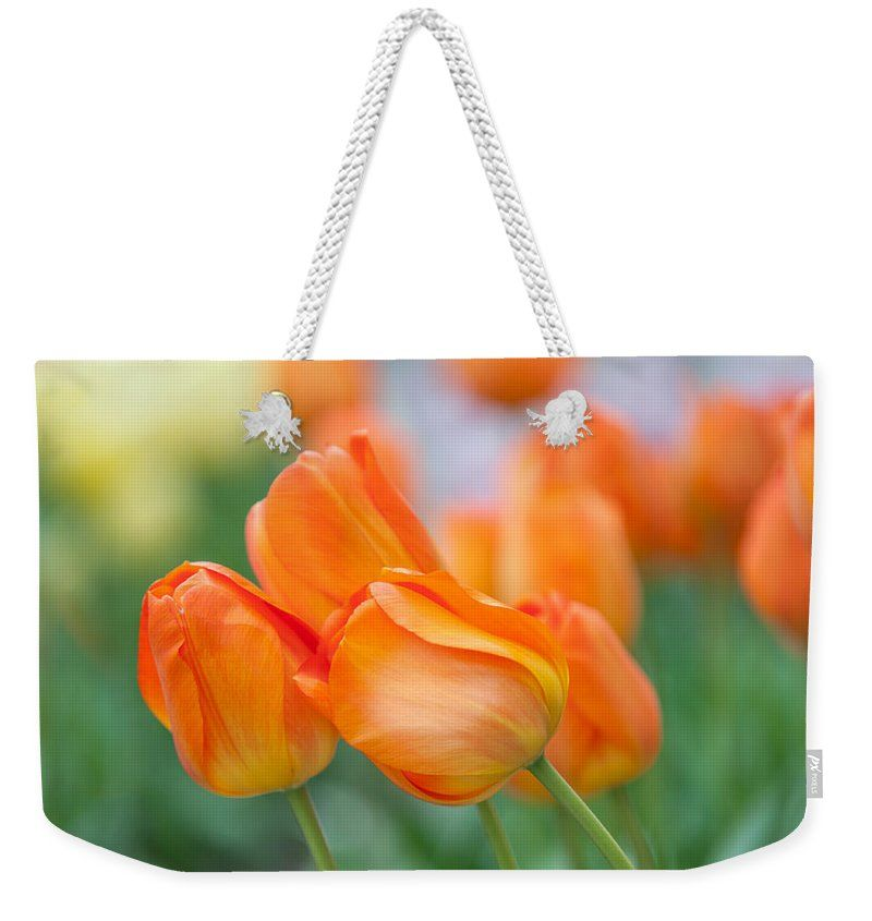 """Dutch Orange Tulips  Weekender Tote Bag (24"""" x 16"""") by Jenny Rainbow.  The tote bag is machine washable and includes cotton rope handle for easy carrying on your shoulder.  All totes are available for worldwide shipping and include a money-back guarantee."""
