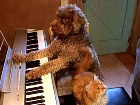 Dog And Cat Play Piano Cat Playing Dog Cat Cat Vs Dog