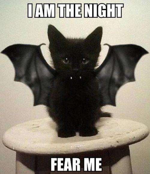 happy halloween funny meme - Funny Cat Halloween