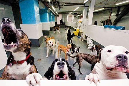 3 Ways To Make Your Veterinary Hospital More Pet Friendly Animal Shelter Design Veterinary Hospital Pets