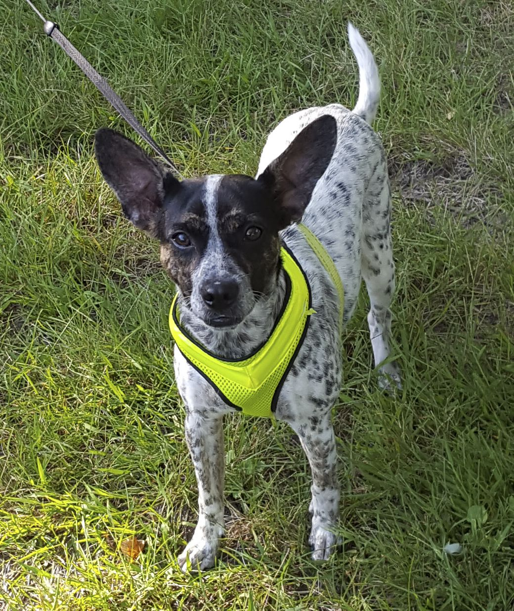 Adopt lucy on terrier mix dogs dogs prior lake